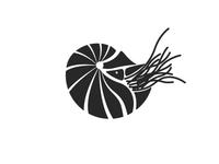 Silhouette chambered nautilus illustration