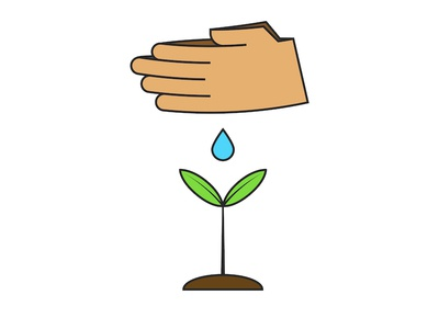 Human hands watering a young plant.