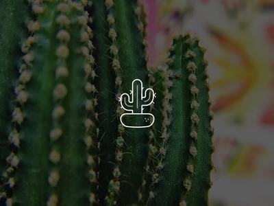 Cactus cactus nature plant icon
