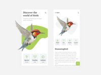 World of birds mobile app app design birds user interface dribbble user experience design clean ux ui