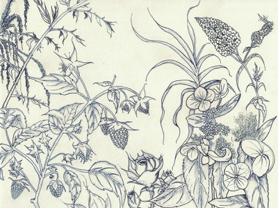 nature nature pencil ink sketchbook art nft illustration