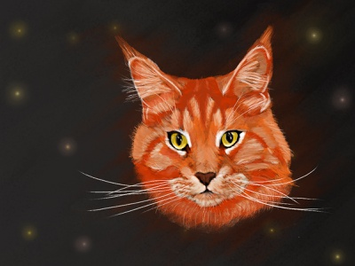 Mainecoon red tabby maine