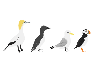 Coastal Birds puffin coastal birds animals birds nature illustration
