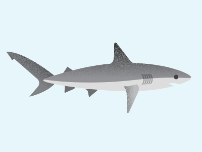 Shark! shark ocean infographics sealife