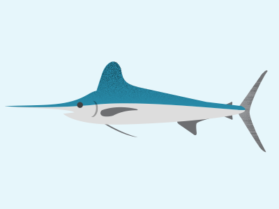 Swordfish swordfish infographics ocean sealife