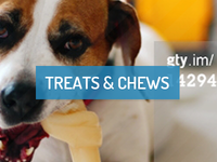Paws for Pets Website