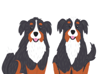 In-Progress Bernese Mountain Dogs