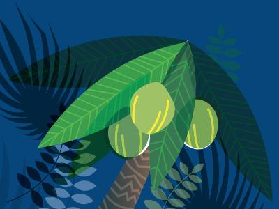 coconuts tropical coconut palm illustration