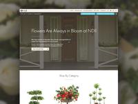 Natural Decorations Site Launch