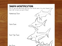 Shark identification sheet