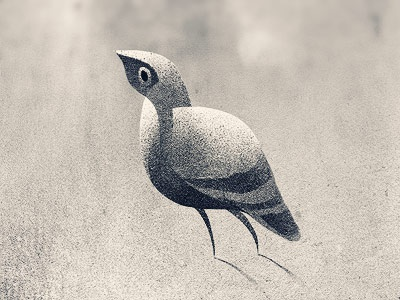 Birdie bird illustration