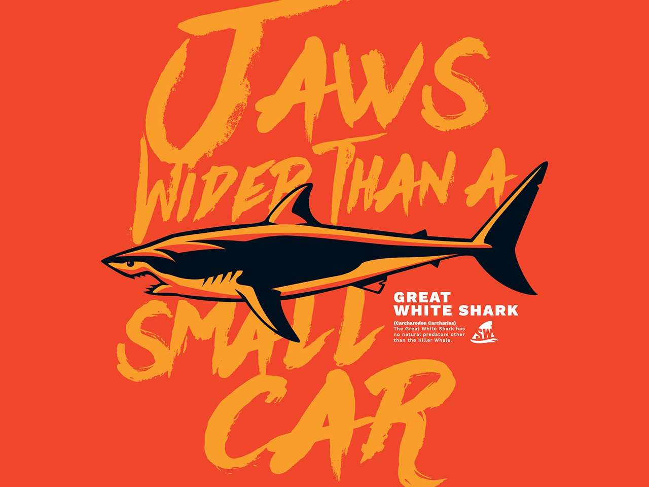 Pilot web shark week7