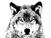 Wolf 2 CU