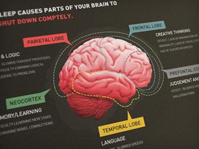 Brain Chart illustration diagram brain web info-graphic photoshop