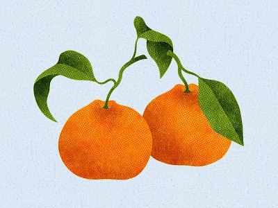 144 citrus oranges satsuma oranges