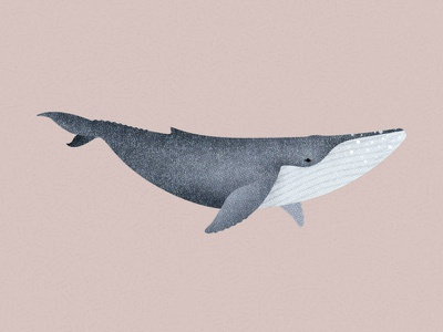 145 illustration marine life humpback whale whale