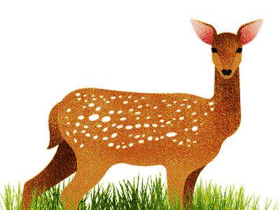 147 animal fauna flora deer