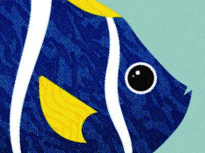 148 illustration marine life fish