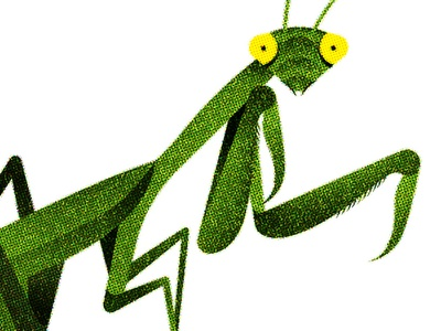148 illustration insect bug praying mantis
