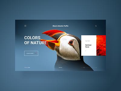 Colors Of Nature, a web gallery - concept design color gallery portfolio home page landing page nature animals gradients minimal website web design photo web web app