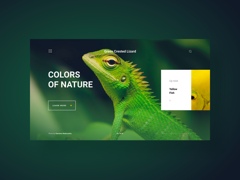 Colors Of Nature a web gallery - concept design web app web photo web design website minimal gradients animals nature landing page home page portfolio gallery color