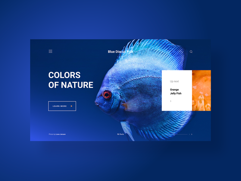 Colors Of Nature, a web gallery - concept design web app web photo web design website minimal gradients animals nature landing page home page portfolio gallery color