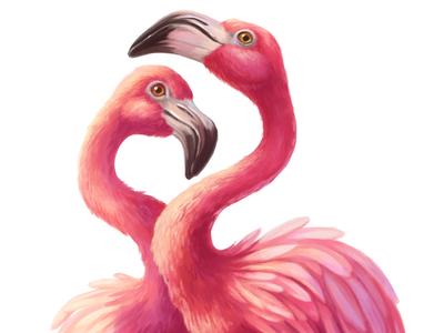 Pink flamingos love illustration pink bird flamingo