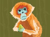Snubbed Nose Monkey