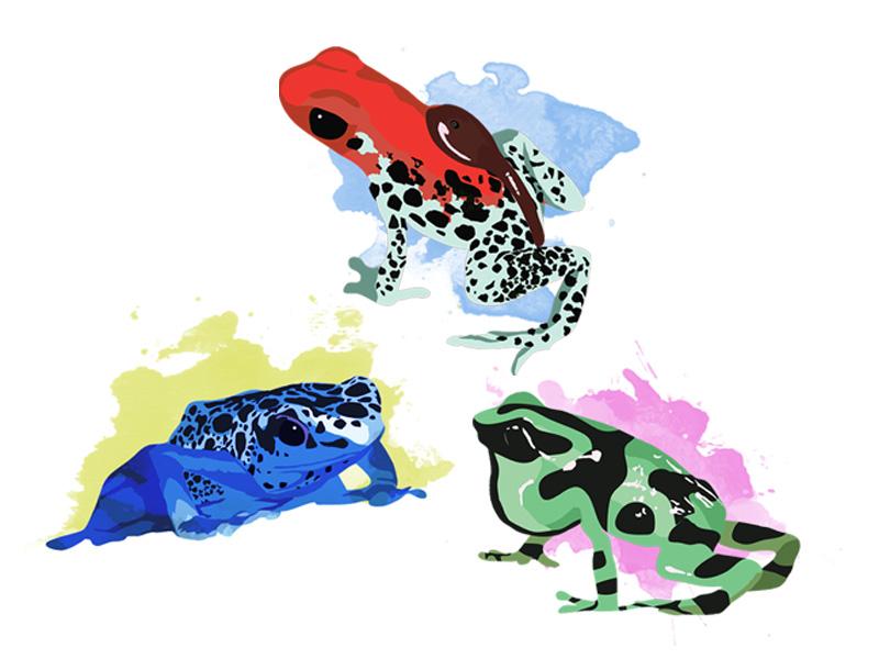 Poison Dart Frogs illustration animals rainforest blue amphibian frog dart poison