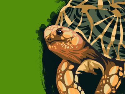 Geochelone platynota Face splatter pattern scales illustration vector animal reptile turtle tortoise