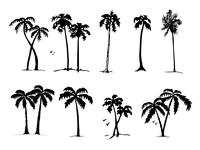 Palm tree exploration