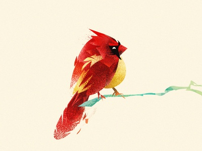 Mid-Winter Cardinal