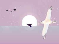Albatros Across The Sea