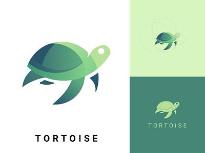 TORTOISE design illustration