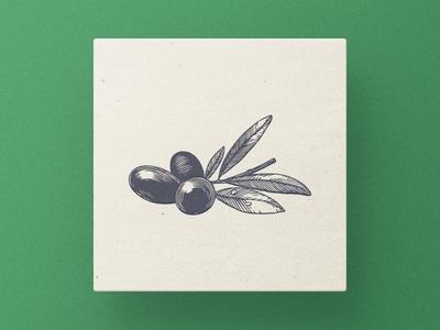 Olive technique pencil pen paper old oil illustrator engraving drawing leaf olive branch