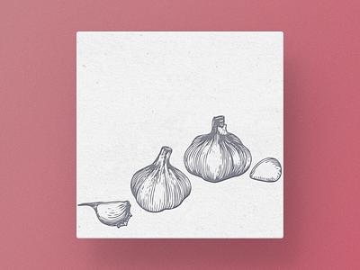 Garlic technique pencil pen paper old illustrator engraving drawing garlic