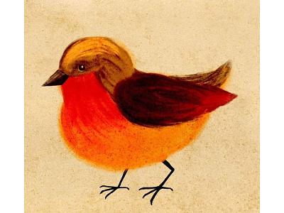 Tender robin bird illustration design watercolor bardot brush digital art digital painting procreate