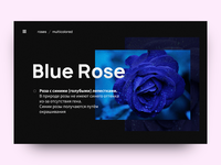 Blue Rose — Page prototype