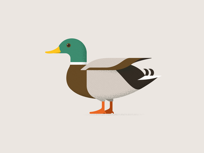 Mallard Duck simple design web branding mallard logo duck animal bird simple vector design icon illustration
