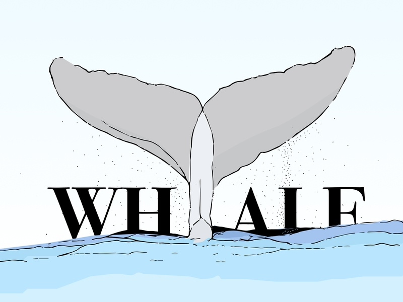 Whale sea whale inktober inktober2018