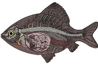 italian fish.