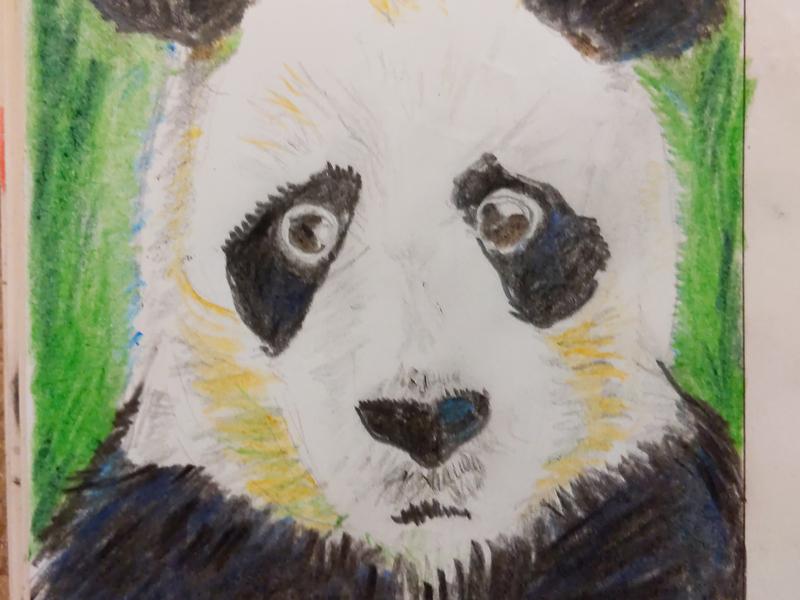 Panda alabama panda daily drawing illustration sketch