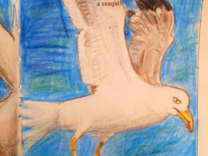 Seagull seagull daily drawing alabama illustration sketch