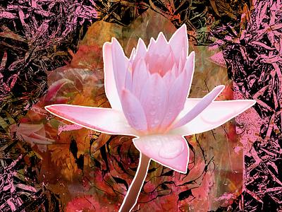 Air & Light pink flower photography vector art vector