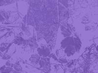 Portland in Purple