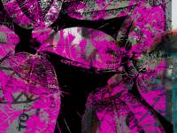 San Francisco Black & Pink