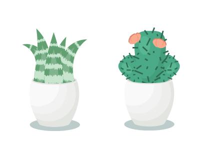 Succulent 400x300