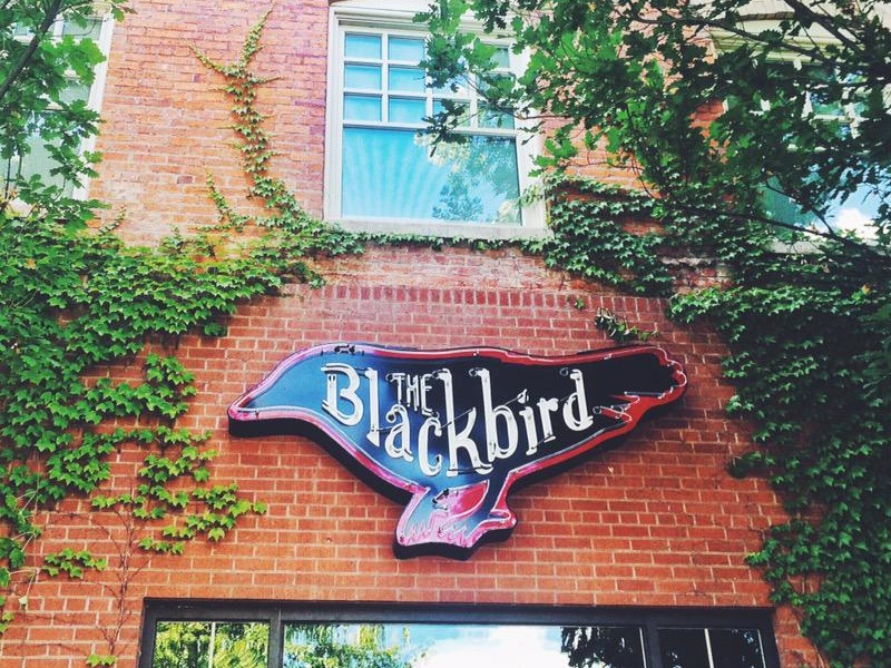 The Blackbird - neon sign branding logo lettering bird sign signage neon