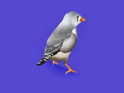 Perch vector artwork illustrator illustration branding graphic design logo bird 2d art