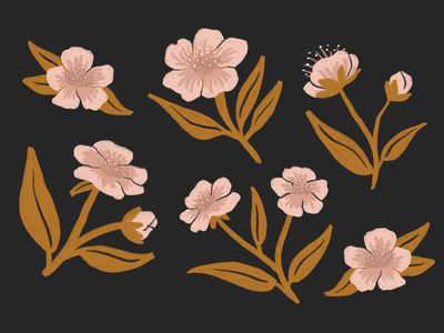 Cherry Blossoms 100dayproject procreate illustrator japan hanami cherry flowers womenwhodraw womenofillustration cherry tree cherry blossom illustration design